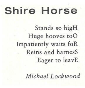 shire-horse